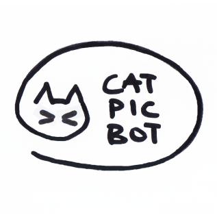 Cat Pic Bot